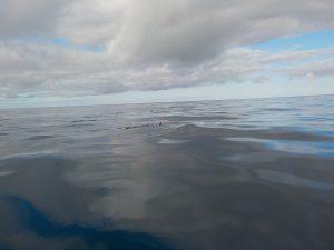 So sieht es typischerweise aus, wenn man einen Delfin zu fotografieren versucht. (c) 2016 by litteratur.ch
